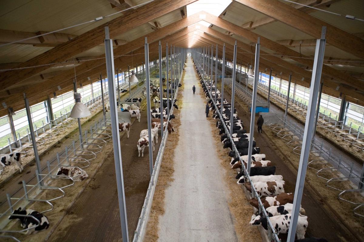Строительство фермы для КРС своими руками